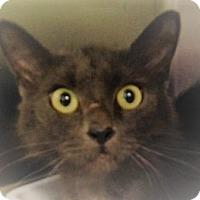 Adopt A Pet :: Oksana - Germantown, MD