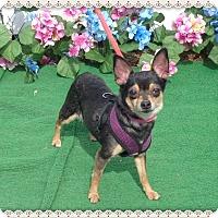 Adopt A Pet :: SANDY aka MONKEY - Marietta, GA
