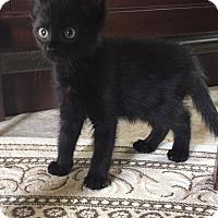 Adopt A Pet :: Lilly - Hampton, VA