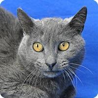 Adopt A Pet :: Trinity - Pagosa Springs, CO