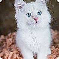 Adopt A Pet :: Rikki - Eagan, MN