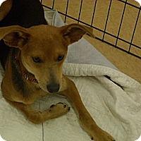 Adopt A Pet :: Ethan - Windsor, MO