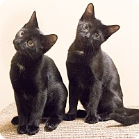 Adopt A Pet :: Clover and Wishbone - Chicago, IL