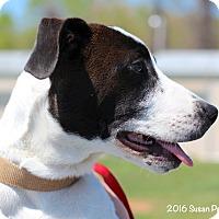 Adopt A Pet :: Obie - Bedford, VA