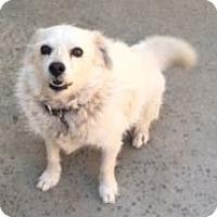 Adopt A Pet :: Sparky - Canoga Park, CA