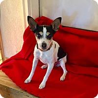 Adopt A Pet :: Enzo - Adoption Pending - Hillsboro, IL
