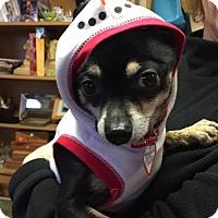Adopt A Pet :: Manny - Grass Valley, CA