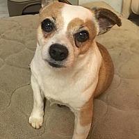 Adopt A Pet :: LOUIE - Linden, NJ
