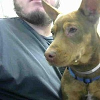 Adopt A Pet :: SQUATTY - Conroe, TX