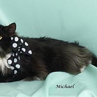 Adopt A Pet :: Michael - Kerrville, TX