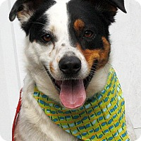 Adopt A Pet :: Buzz - Mayflower, AR