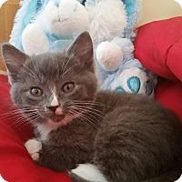 Adopt A Pet :: Gus - Monroe, NC