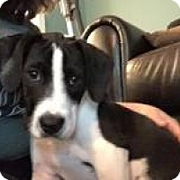 Adopt A Pet :: Scooter - Marlton, NJ