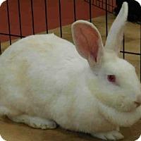 Adopt A Pet :: ILISA - Pittsburgh, PA