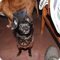 Adopt A Pet :: Hollee - Creston, CA
