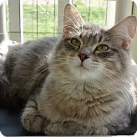 Adopt A Pet :: Ursula - Waller, TX