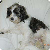 Adopt A Pet :: Panzer - Umatilla, FL