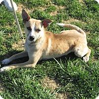 Adopt A Pet :: YOGI - LaGrange, KY