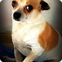 Adopt A Pet :: Carter - Tijeras, NM