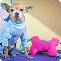 Adopt A Pet :: Cameron - San Marcos, CA