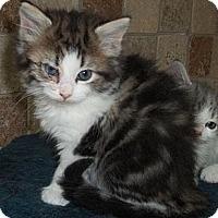 Adopt A Pet :: Lily - Acme, PA