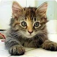 Adopt A Pet :: Ruby - Arlington, VA