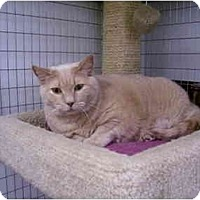 Adopt A Pet :: Buffy - Scottsdale, AZ