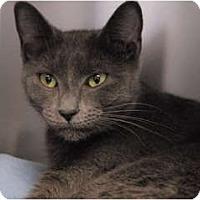 Adopt A Pet :: Layla - Lunenburg, MA