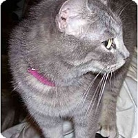 Adopt A Pet :: Minnie Mouse - Goldsboro, NC