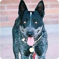 Adopt A Pet :: Tanya Tucker - Phoenix, AZ