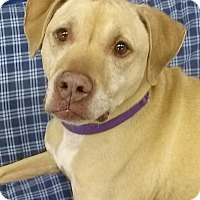 Adopt A Pet :: Porsha - Lake Odessa, MI