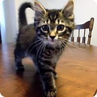Adopt A Pet :: Carrot - Byron Center, MI
