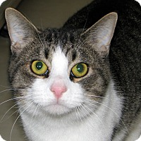 Adopt A Pet :: Boris - Ruidoso, NM