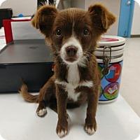 Adopt A Pet :: Sweetpea - Gulfport, MS