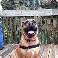 Adopt A Pet :: Xena - Tallahassee, FL