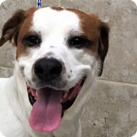 Adopt A Pet :: Champ - Shorewood, IL