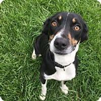 Adopt A Pet :: Gracie - Marion, OH