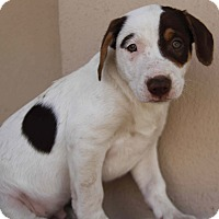 Adopt A Pet :: Jase - Yuba City, CA