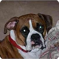 Adopt A Pet :: Bandit - Thomasville, GA