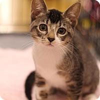 Adopt A Pet :: Starfire - Sacramento, CA
