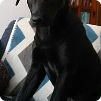 Adopt A Pet :: Shiloh - Franklin, VA