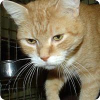 Adopt A Pet :: WILMA - Acme, PA