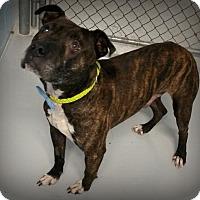 Adopt A Pet :: Rico - Muskegon, MI