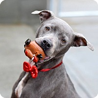 Adopt A Pet :: Jubilee - Long Beach, NY