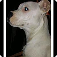 Adopt A Pet :: DeVille - Winchester, CA