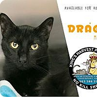 Adopt A Pet :: Drago - Davenport, IA