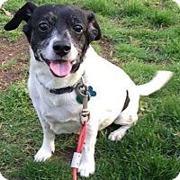 Adopt A Pet :: ED - Elyria, OH