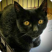 Adopt A Pet :: Curtis - Trevose, PA