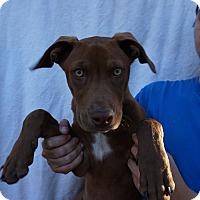 Adopt A Pet :: Mae - Oviedo, FL