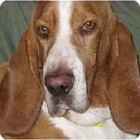 Adopt A Pet :: Cyrus - Phoenix, AZ